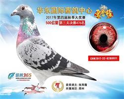 华东公棚决赛476名