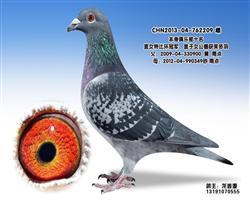 龙鑫209