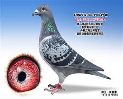 龙鑫349
