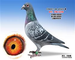 龙鑫625
