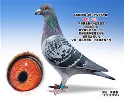 龙鑫972