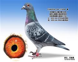 龙鑫498