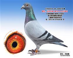 龙鑫018
