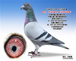 龙鑫768