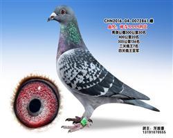 龙鑫861