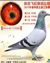 龙鑫330