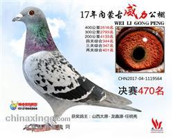 龙鑫564
