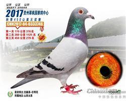 龙鑫746