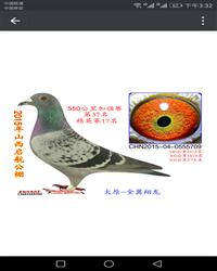 龙鑫709