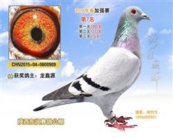 龙鑫909