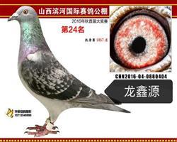 龙鑫404