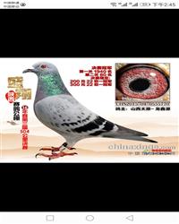 龙鑫770