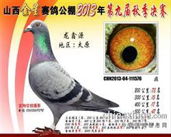 龙鑫576