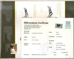 DNA鉴定书