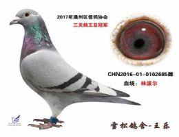 2017年通州区三关鸽王总冠军