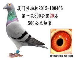 厦门劳动杯2015-100466