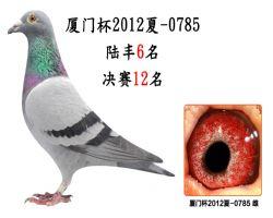 厦门杯2012夏-0785