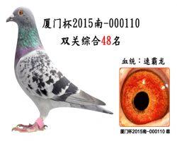 厦门杯2015南-000110