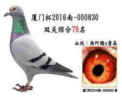 厦门杯2016南-000830