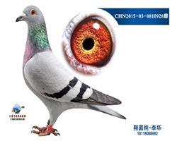 CHN2015-03-0810928雌