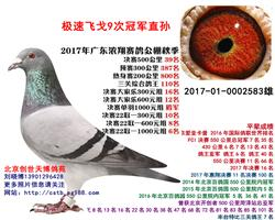 广东浓翔公棚决赛39名极速飞戈直孙