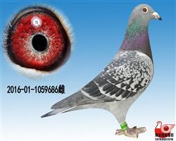 【提速�O品�N雌】9686