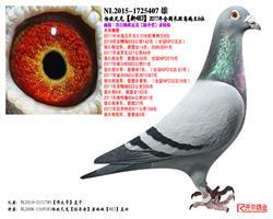 杨欧瓦克【新483】17年长距离鸽王6位
