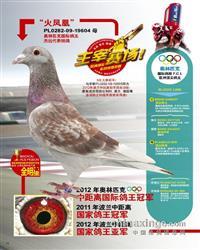 奥林匹克国际鸽王冠军【火凤凰】