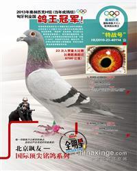 奥林匹克全国鸽王冠军【特战号】