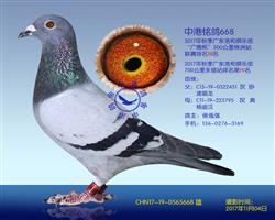 中港铭鸽668