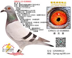 《已售北京》8865