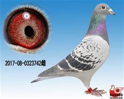 【凡龙超级73】极品雌