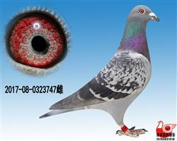 【凡龙超级73】近亲极品雌