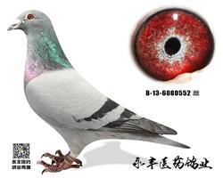胡本年轻艺术家四重回血(已支援河北鸽友)