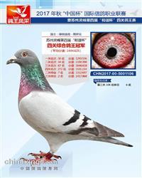 17年苏州灵峰四关鸽王总冠军