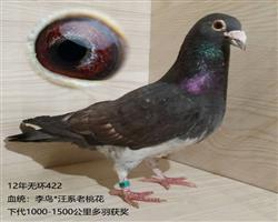 李鸟422