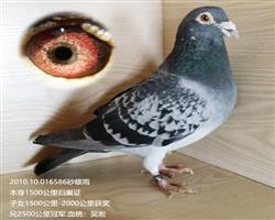 吴淞586