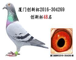厦门创新杯2016-304269
