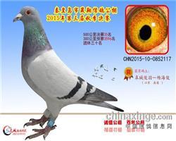 晟翔公棚决赛35名(已售)