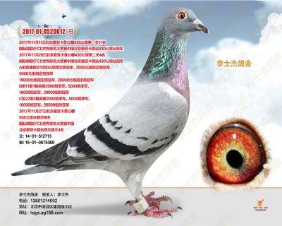 17年北京爱亚卡普双关鸽王4位
