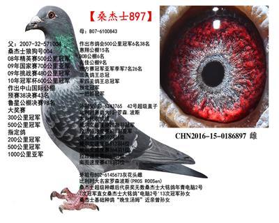 中国铭强赛鸽育种中心