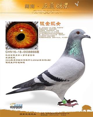 2016年贵州红枫赛鸽中心决赛6名