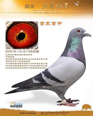 2016年江苏爱翔赛鸽中心决赛11名