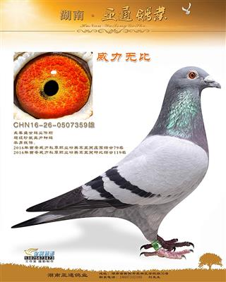 2016年西安威力职业五关庄园综合79名