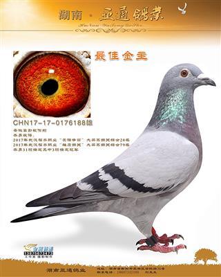 2017年武汉福齐职业四关综合鸽王28名