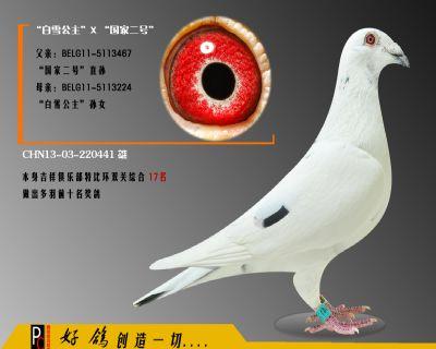 CHN13-03-220441 雄副本