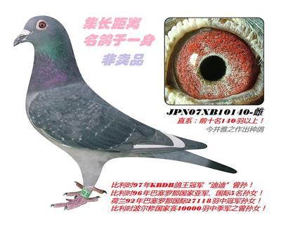 今井140号