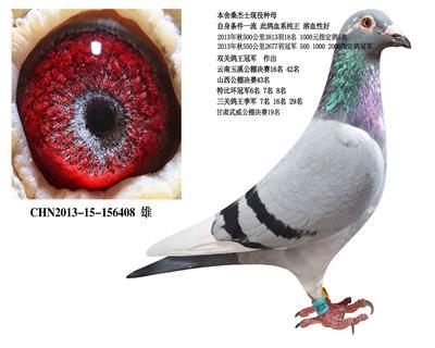 旭跃鸽业种鸽中心