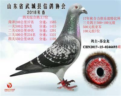 四关鸽王综合7位