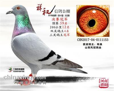 河南濮阳祥和春棚决赛冠军